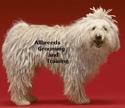 Allbreeds Dog Grooming and Training